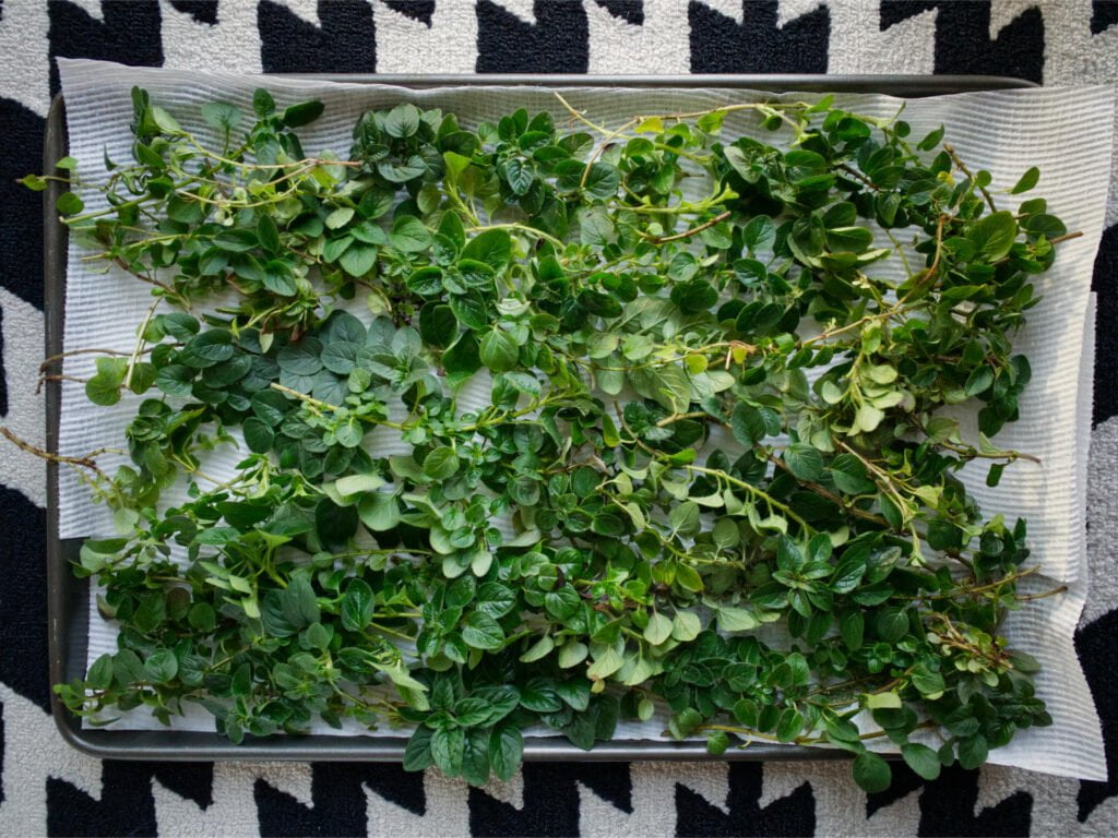 Fresh oregano branches sitting atop a baking tray lined with paper towel